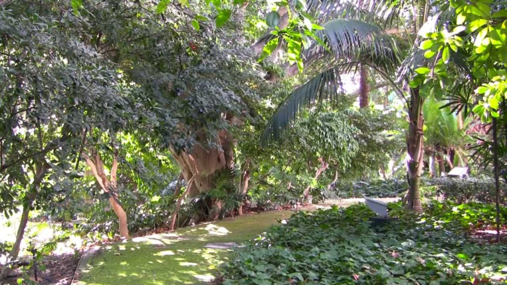 jardin botanico concepcion